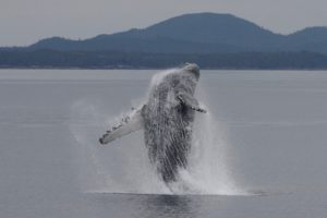 prince rupert whale watching tour